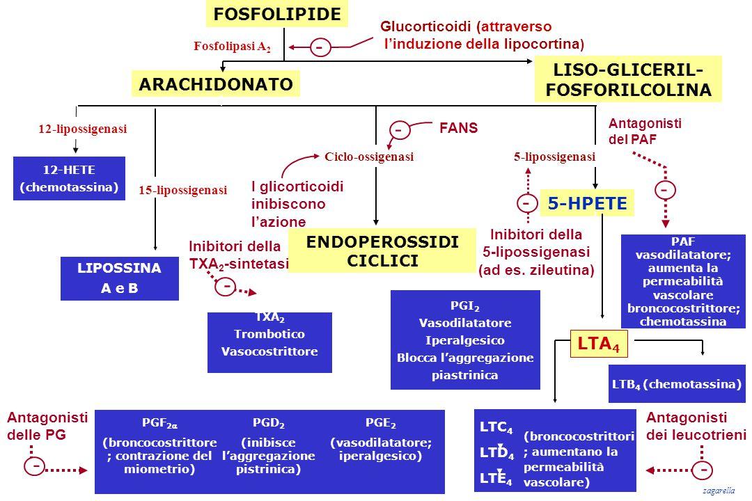 - - - - - - - FOSFOLIPIDE LISO-GLICERIL- FOSFORILCOLINA ARACHIDONATO