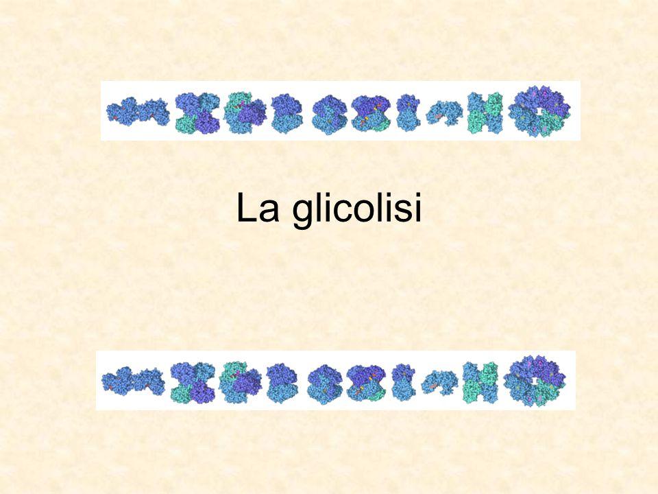 La glicolisi