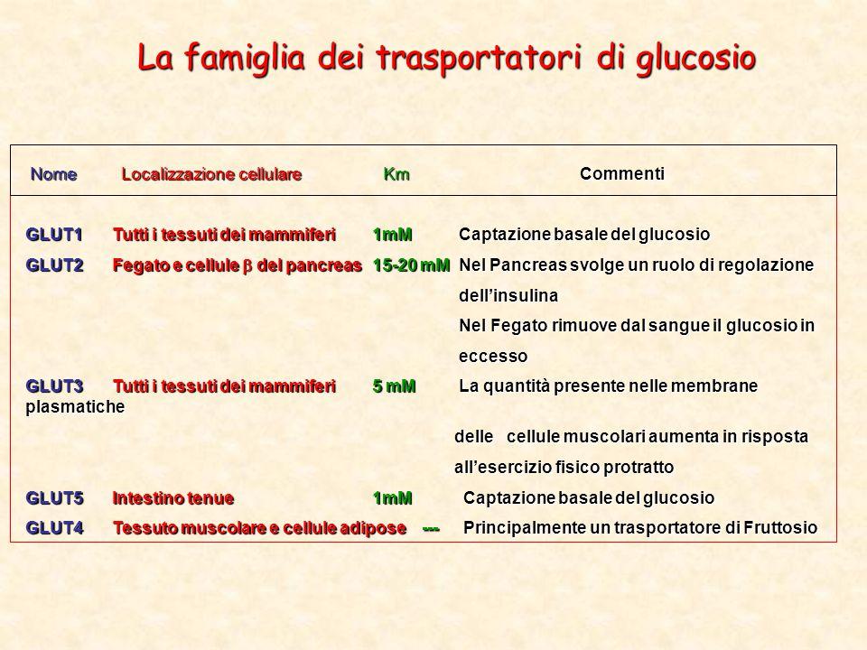 La famiglia dei trasportatori di glucosio