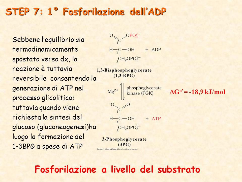 STEP 7: 1° Fosforilazione dell'ADP