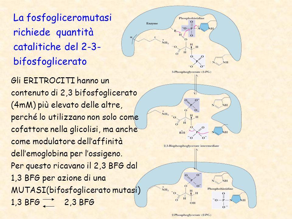 La fosfogliceromutasi