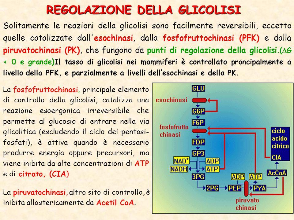 REGOLAZIONE DELLA GLICOLISI