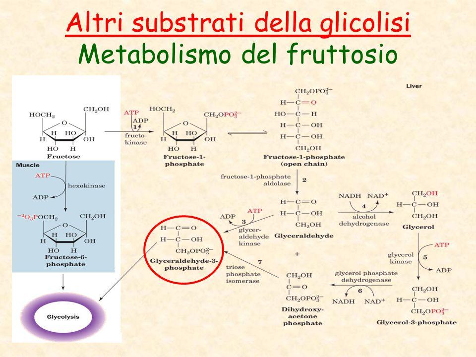Altri substrati della glicolisi Metabolismo del fruttosio