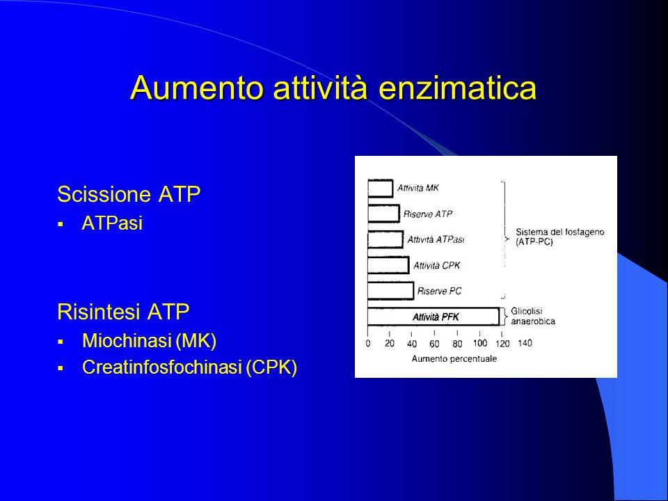 Aumento attività enzimatica