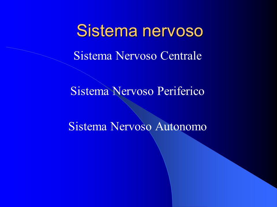 Sistema nervoso Sistema Nervoso Centrale Sistema Nervoso Periferico