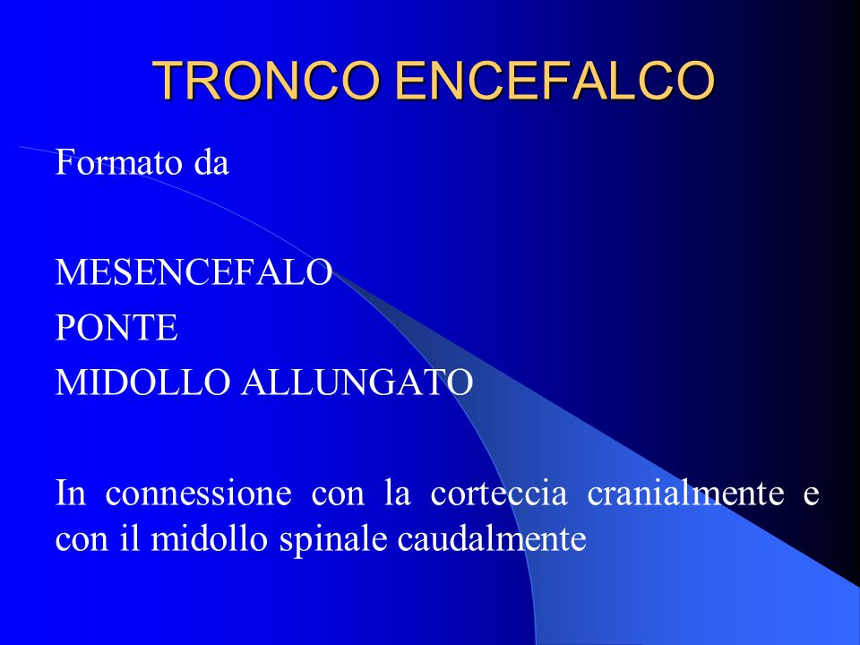 TRONCO ENCEFALCO Formato da MESENCEFALO PONTE MIDOLLO ALLUNGATO