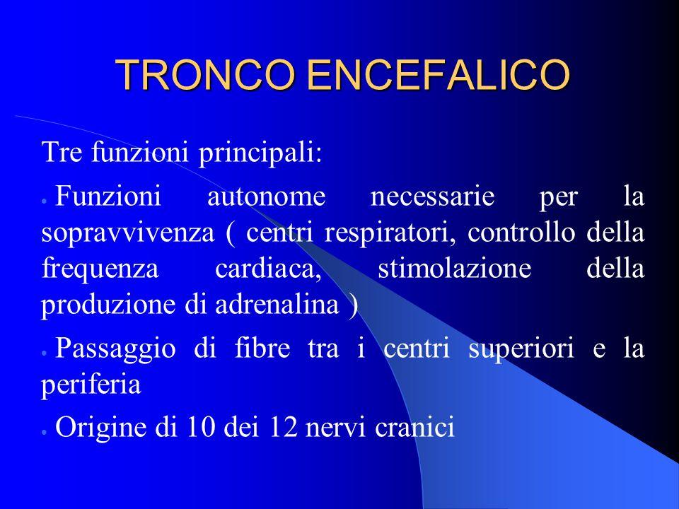 TRONCO ENCEFALICO Tre funzioni principali: