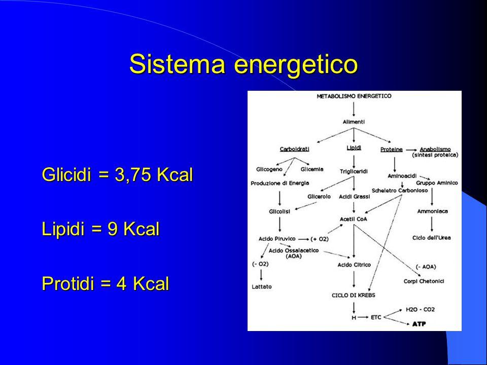 Sistema energetico Glicidi = 3,75 Kcal Lipidi = 9 Kcal