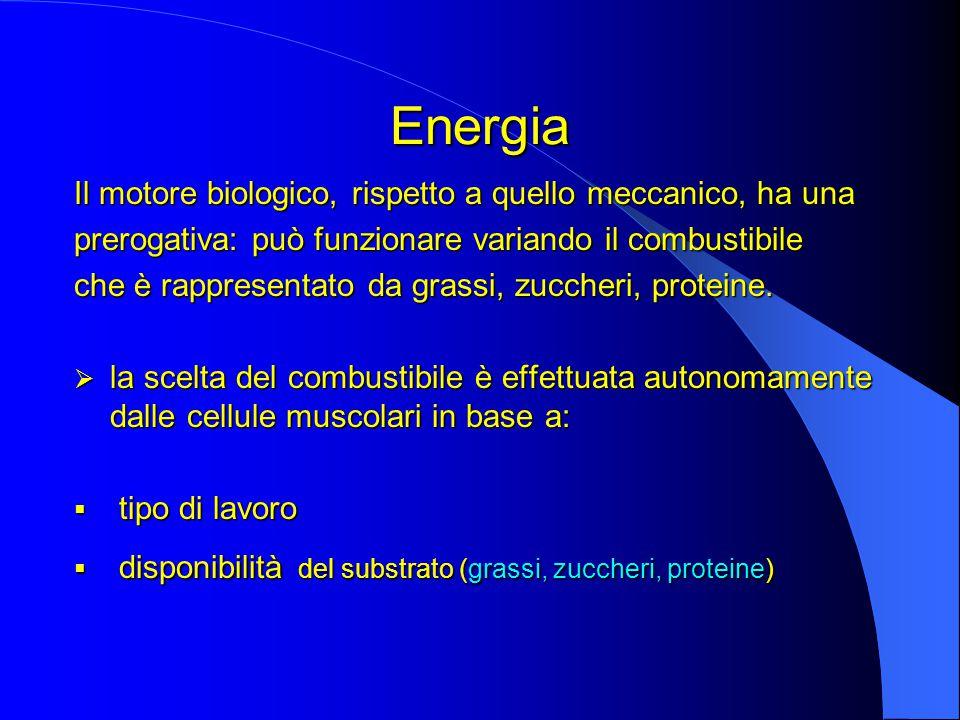 Energia Il motore biologico, rispetto a quello meccanico, ha una