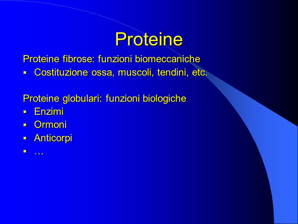 Proteine Proteine fibrose: funzioni biomeccaniche