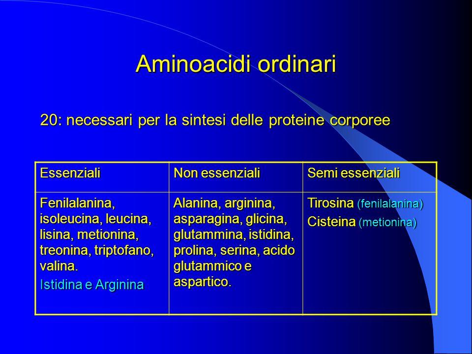 Aminoacidi ordinari 20: necessari per la sintesi delle proteine corporee. Essenziali. Non essenziali.