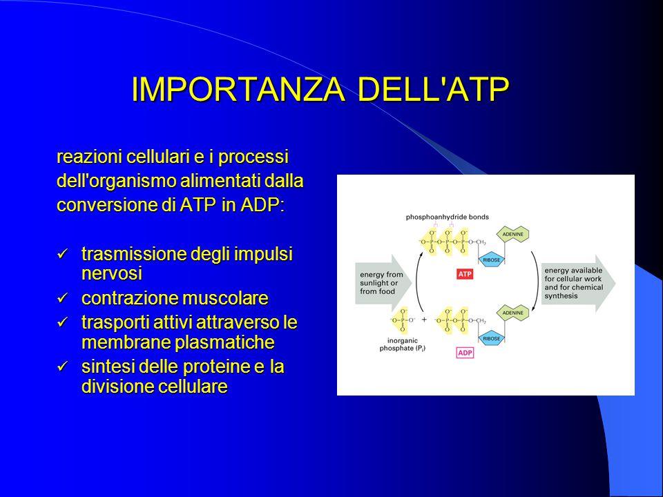 IMPORTANZA DELL ATP reazioni cellulari e i processi