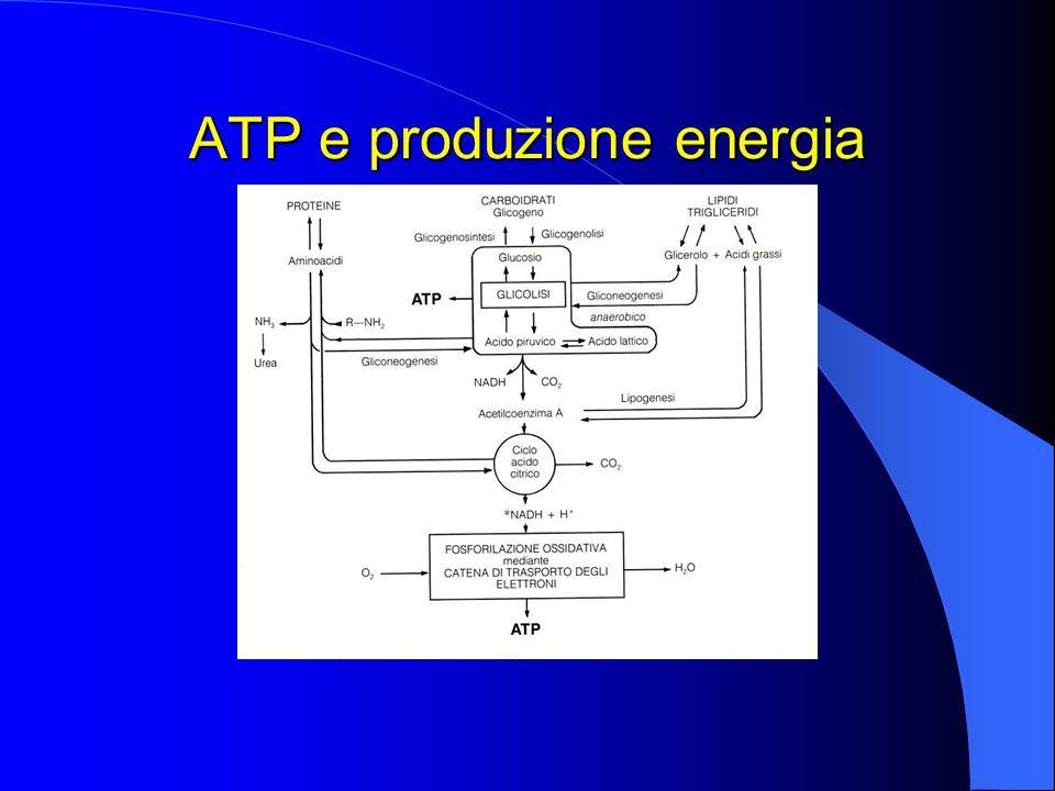 ATP e produzione energia