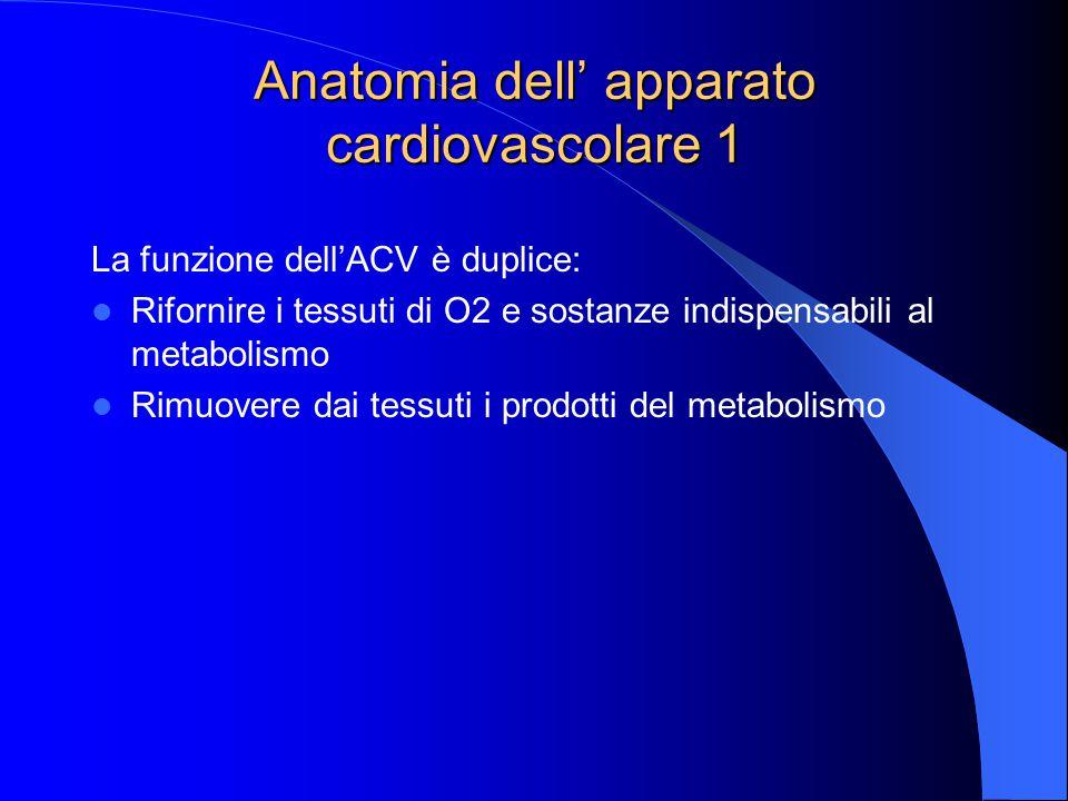 Anatomia dell' apparato cardiovascolare 1