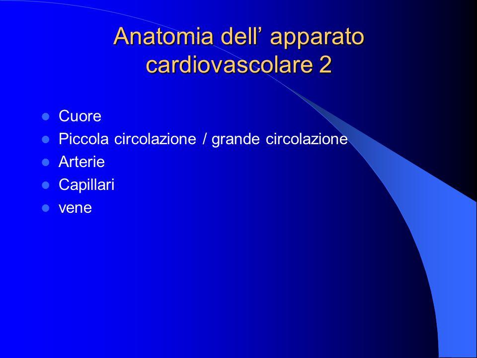 Anatomia dell' apparato cardiovascolare 2
