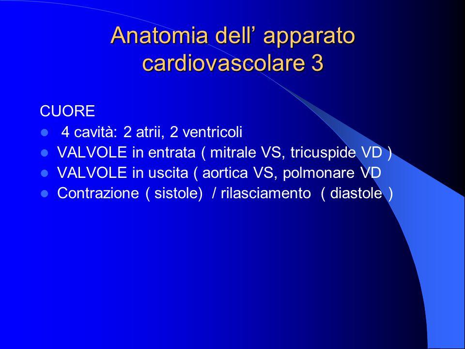 Anatomia dell' apparato cardiovascolare 3