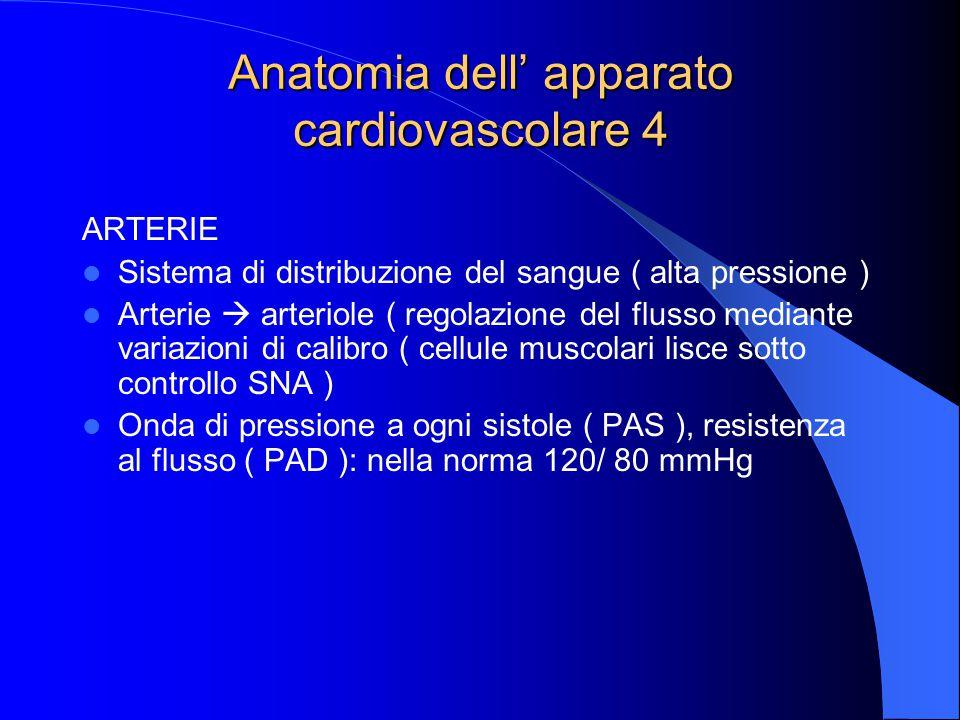 Anatomia dell' apparato cardiovascolare 4