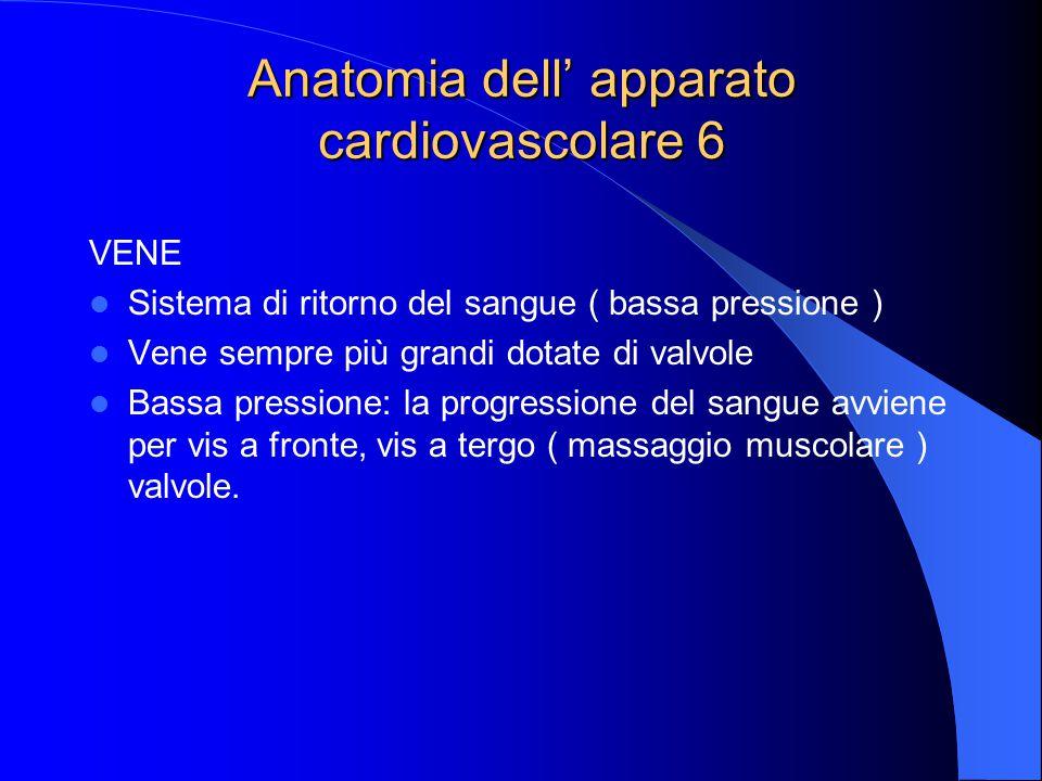 Anatomia dell' apparato cardiovascolare 6