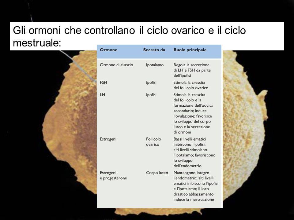 Gli ormoni che controllano il ciclo ovarico e il ciclo mestruale:
