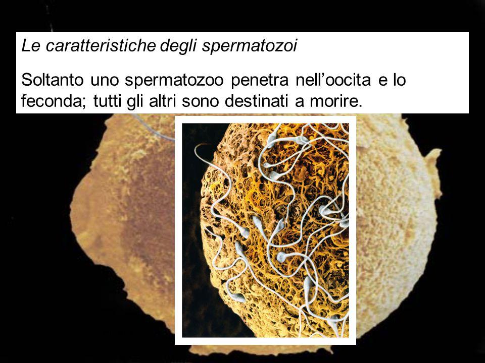 Le caratteristiche degli spermatozoi