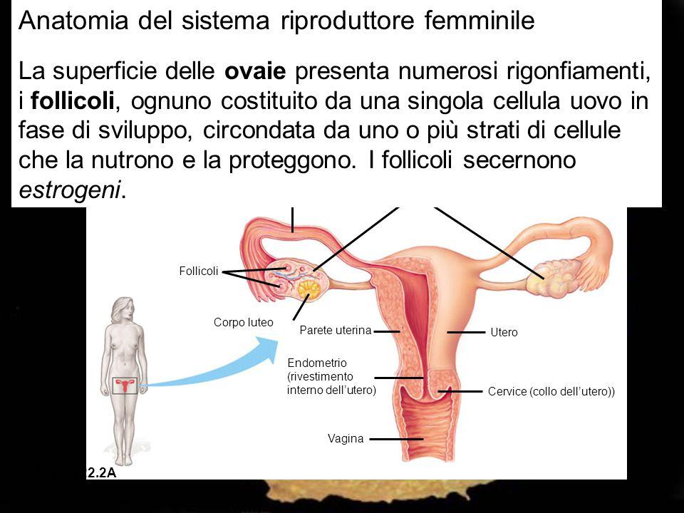 Anatomia del sistema riproduttore femminile