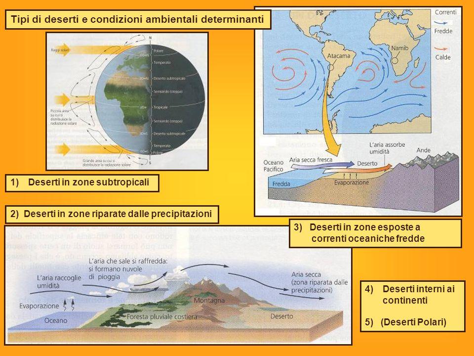Tipi di deserti e condizioni ambientali determinanti
