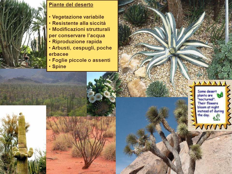 Piante del deserto Vegetazione variabile. Resistente alla siccità. Modificazioni strutturali per conservare l'acqua.