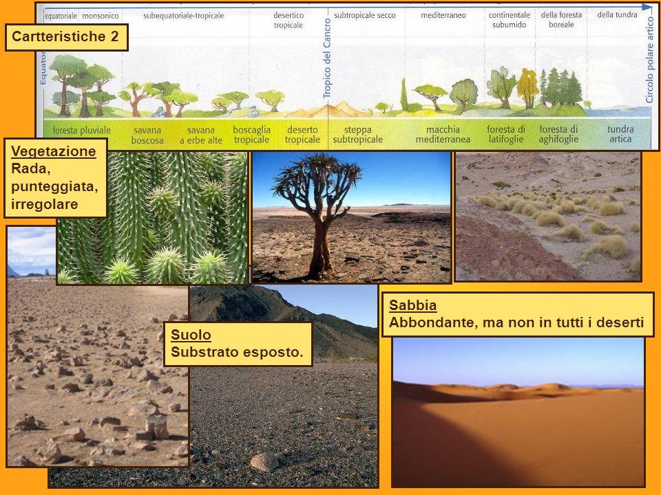 Cartteristiche 2 Vegetazione. Rada, punteggiata, irregolare. Sabbia. Abbondante, ma non in tutti i deserti.