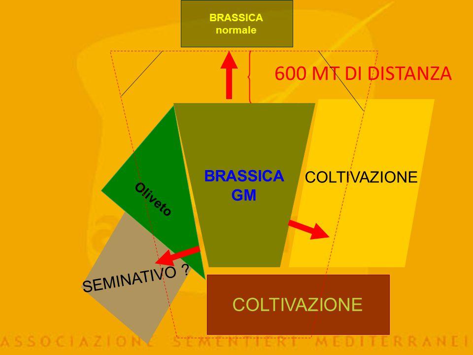 600 MT DI DISTANZA COLTIVAZIONE COLTIVAZIONE BRASSICA GM SEMINATIVO