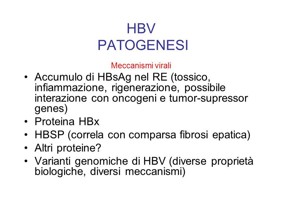 HBV PATOGENESI Meccanismi virali.