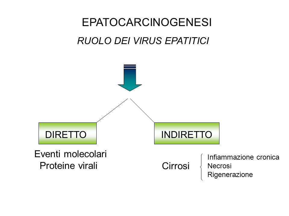 RUOLO DEI VIRUS EPATITICI