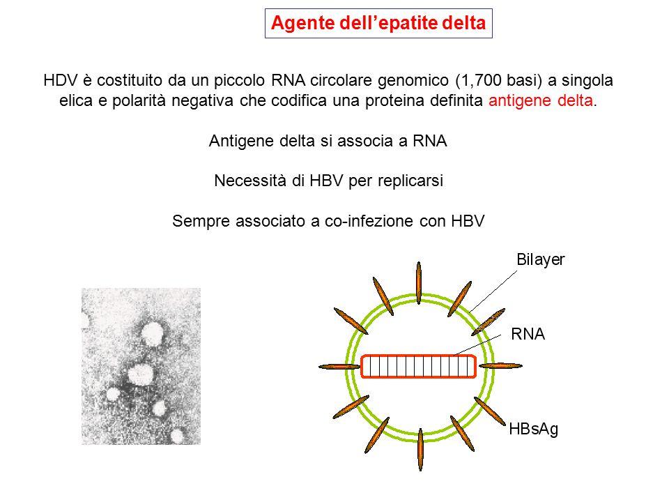 Agente dell'epatite delta