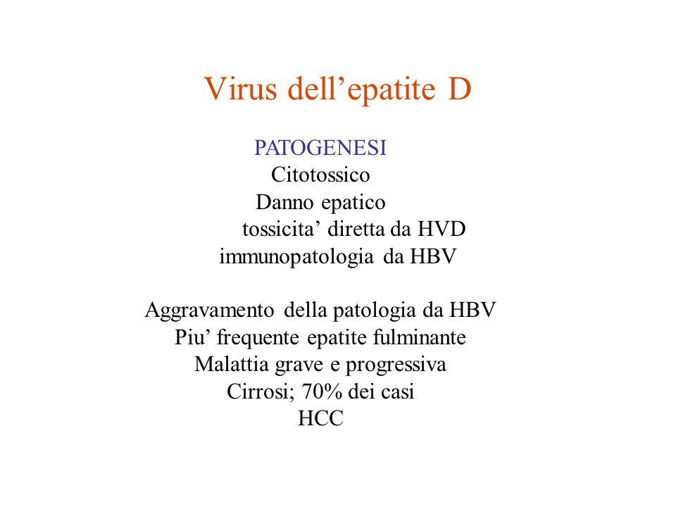Virus dell'epatite D PATOGENESI Citotossico Danno epatico