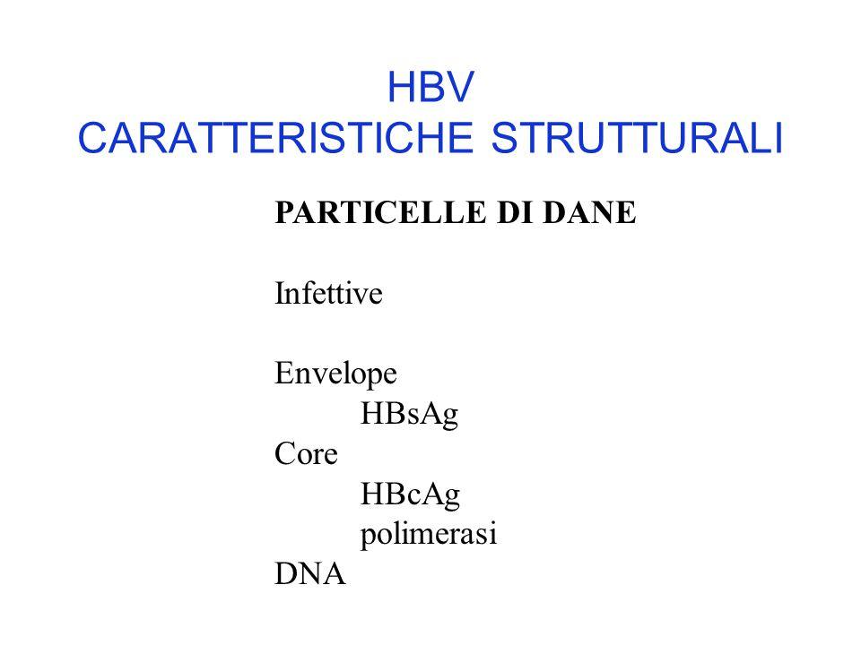 HBV CARATTERISTICHE STRUTTURALI