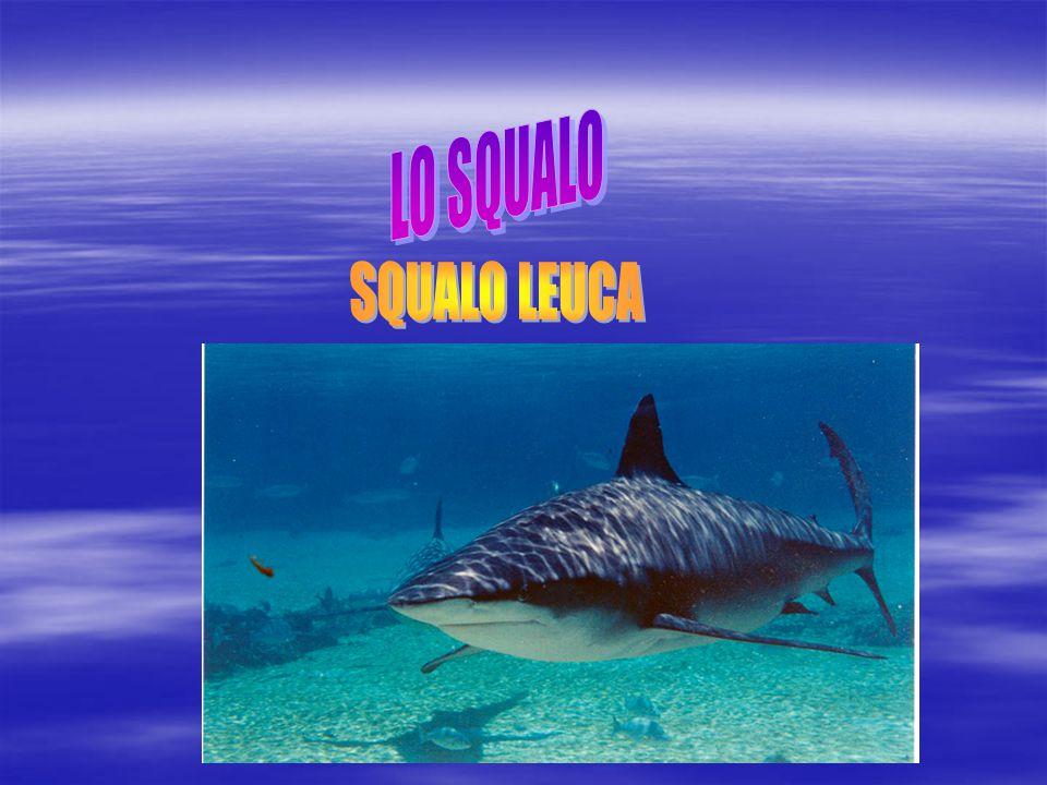 LO SQUALO SQUALO LEUCA