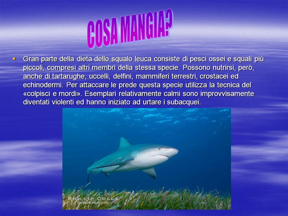 COSA MANGIA