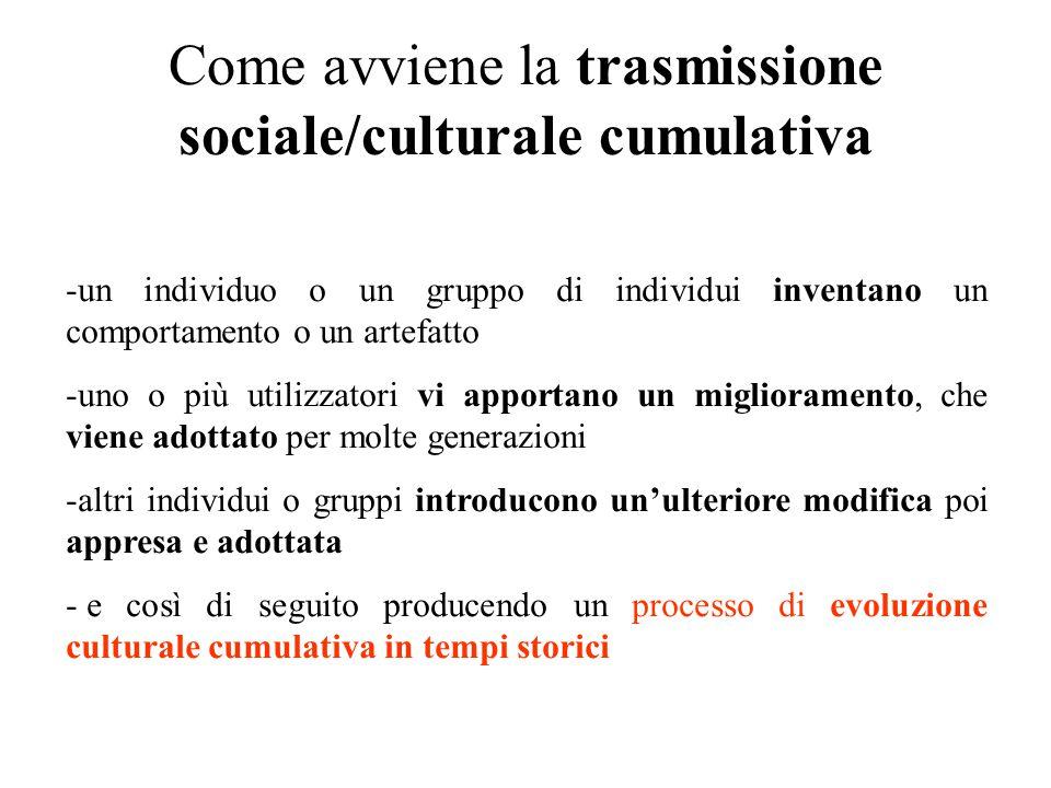 Come avviene la trasmissione sociale/culturale cumulativa