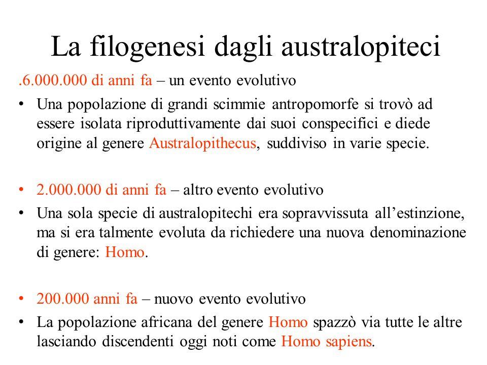 La filogenesi dagli australopiteci