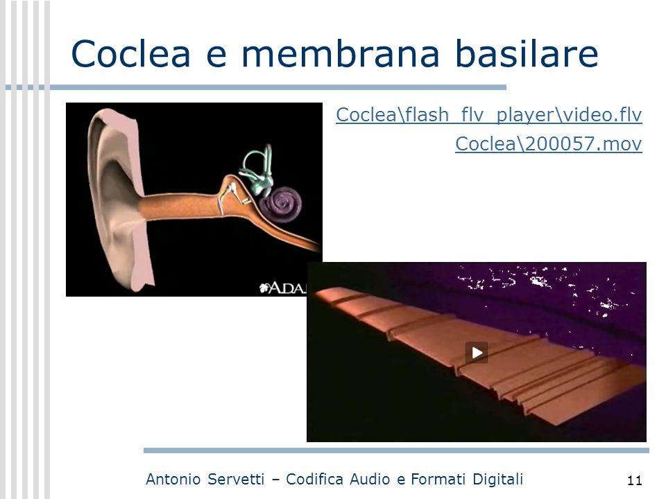 Coclea e membrana basilare