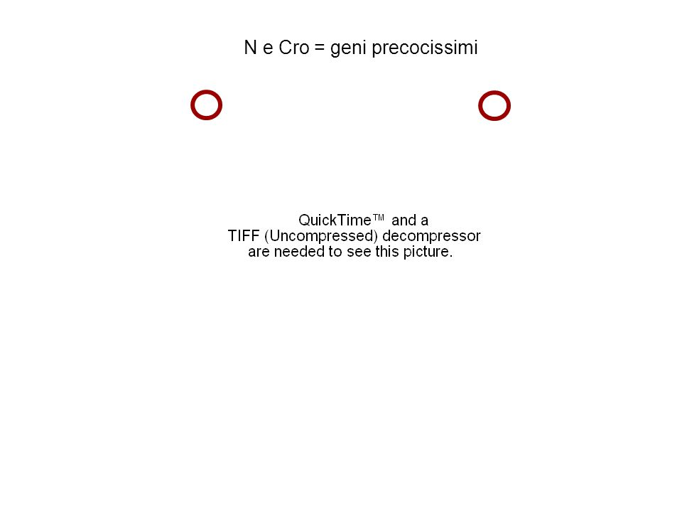 N e Cro = geni precocissimi