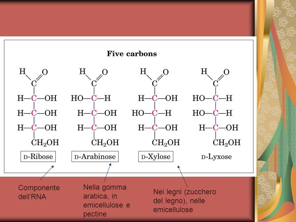 Componente dell'RNA Nella gomma arabica, in emicellulose e pectine.