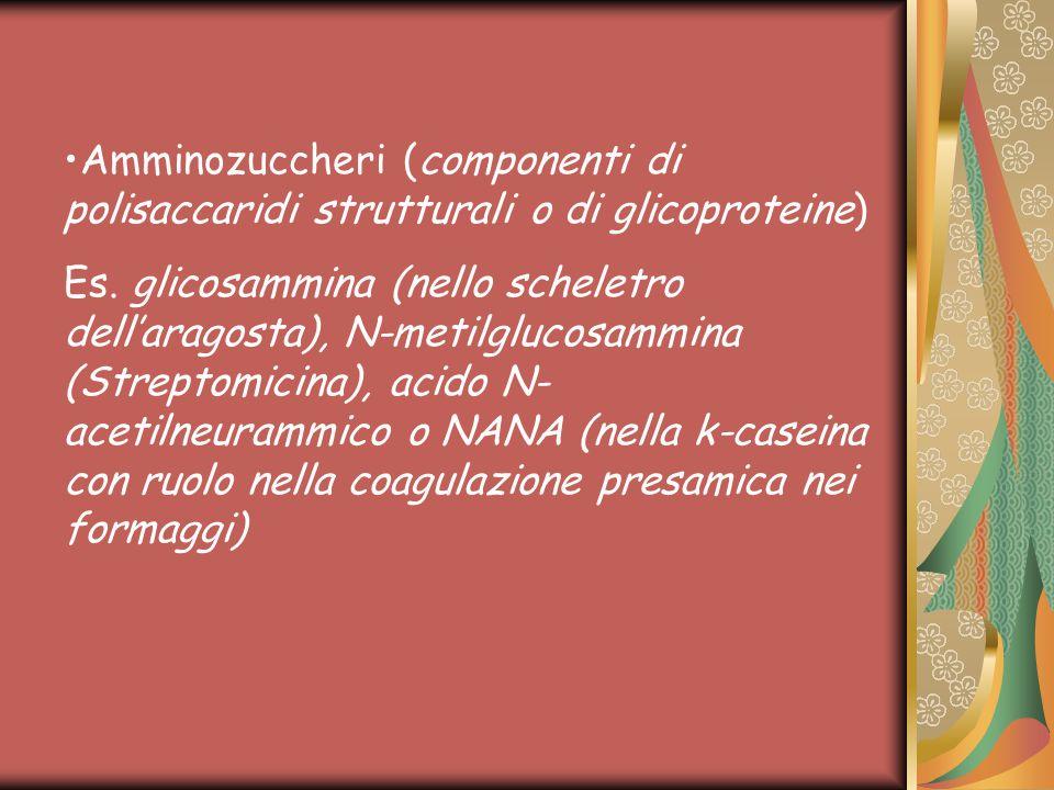 Amminozuccheri (componenti di polisaccaridi strutturali o di glicoproteine)