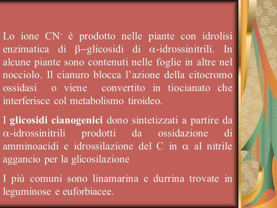 Lo ione CN- è prodotto nelle piante con idrolisi enzimatica di b-glicosidi di a-idrossinitrili. In alcune piante sono contenuti nelle foglie in altre nel nocciolo. Il cianuro blocca l'azione della citocromo ossidasi o viene convertito in tiocianato che interferisce col metabolismo tiroideo.