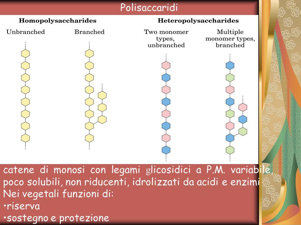 Polisaccaridi catene di monosi con legami glicosidici a P.M. variabile, poco solubili, non riducenti, idrolizzati da acidi e enzimi.