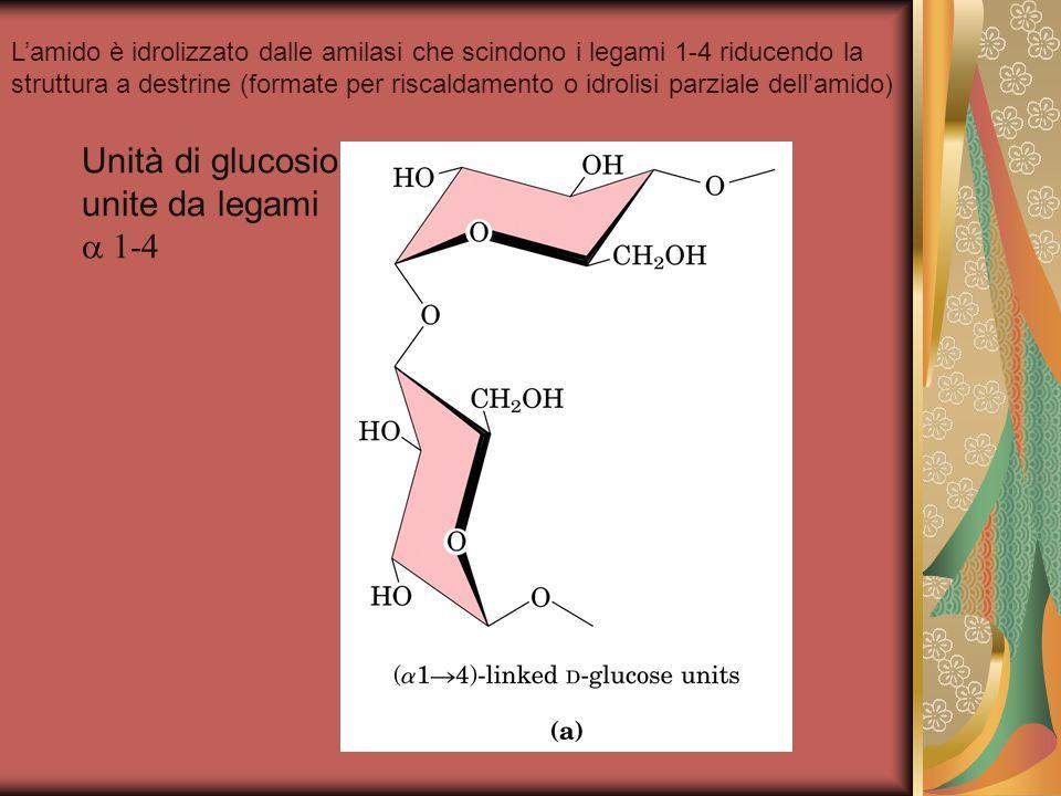 Unità di glucosio unite da legami a 1-4