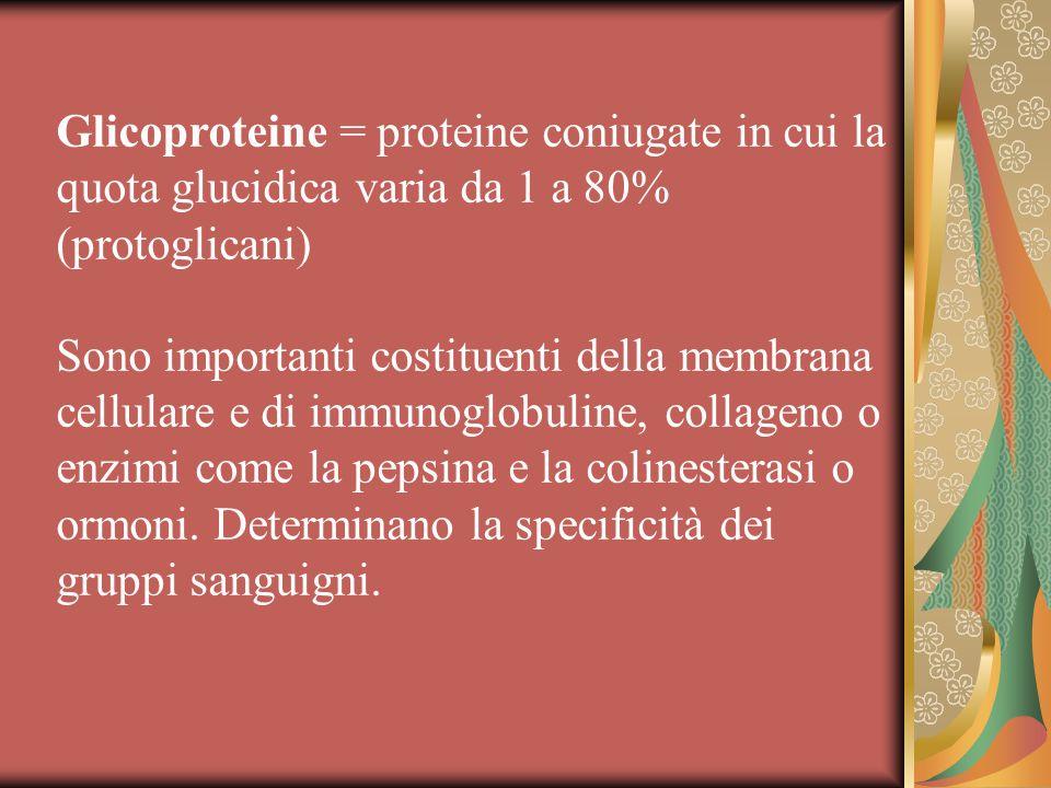 Glicoproteine = proteine coniugate in cui la quota glucidica varia da 1 a 80% (protoglicani)