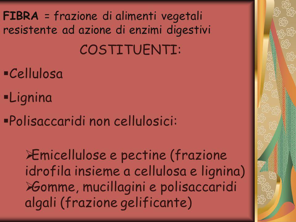 Polisaccaridi non cellulosici: