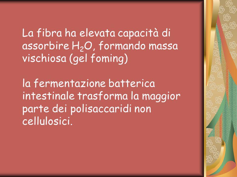La fibra ha elevata capacità di assorbire H2O, formando massa vischiosa (gel foming) la fermentazione batterica intestinale trasforma la maggior parte dei polisaccaridi non cellulosici.