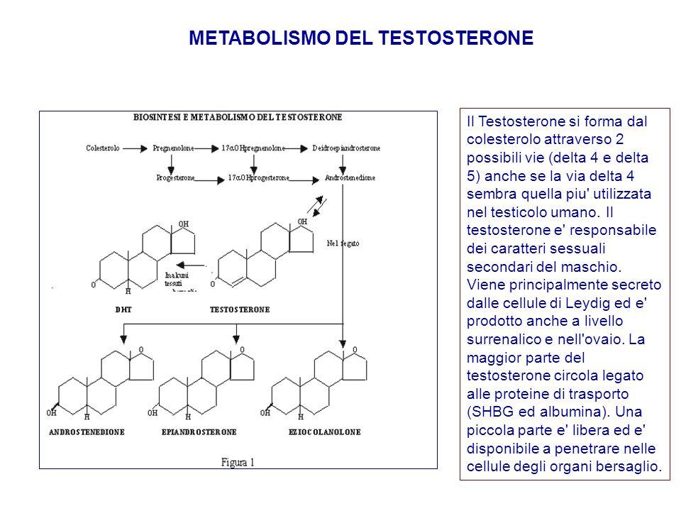 METABOLISMO DEL TESTOSTERONE