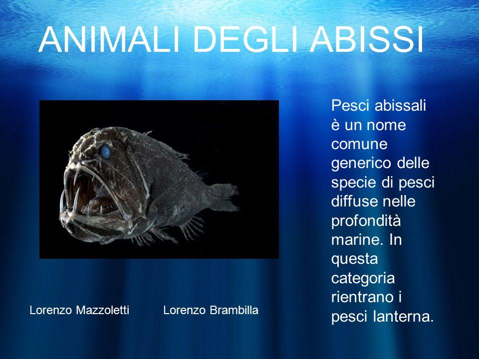 Animali degli abissi pesci abissali un nome comune for Pesci online